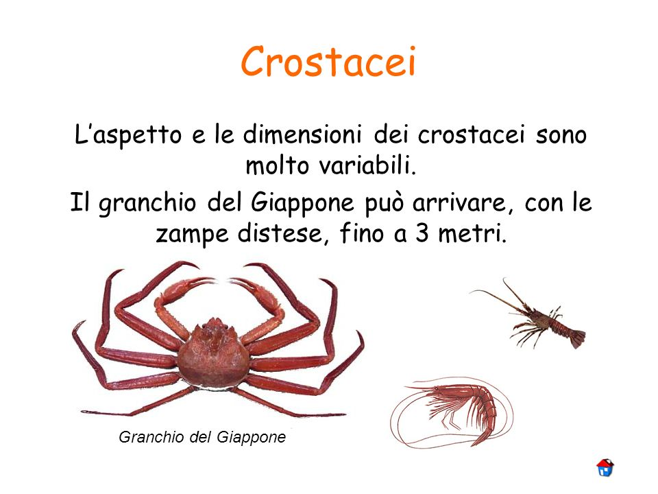 L'aspetto e le dimensioni dei crostacei sono molto variabili.