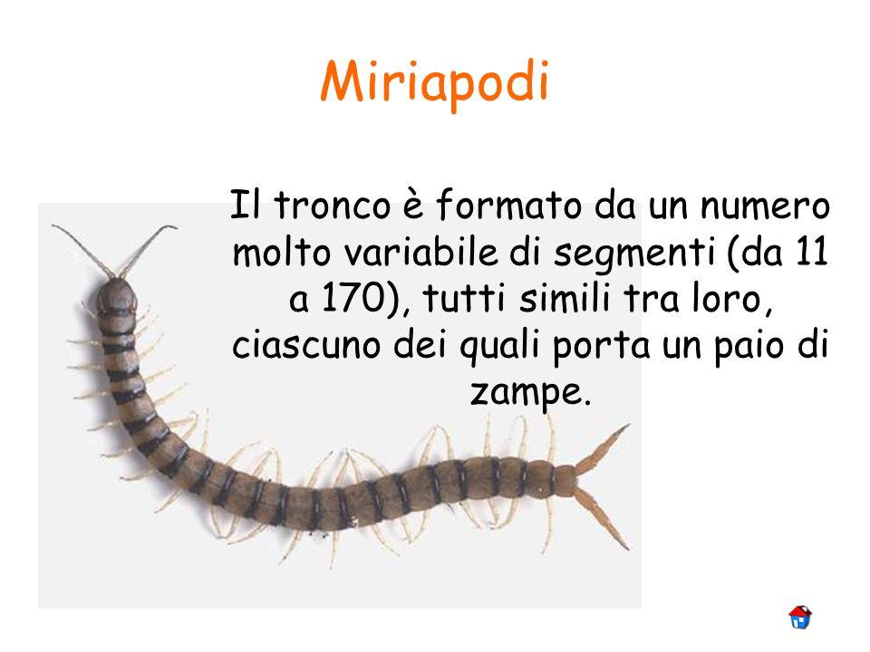 Miriapodi