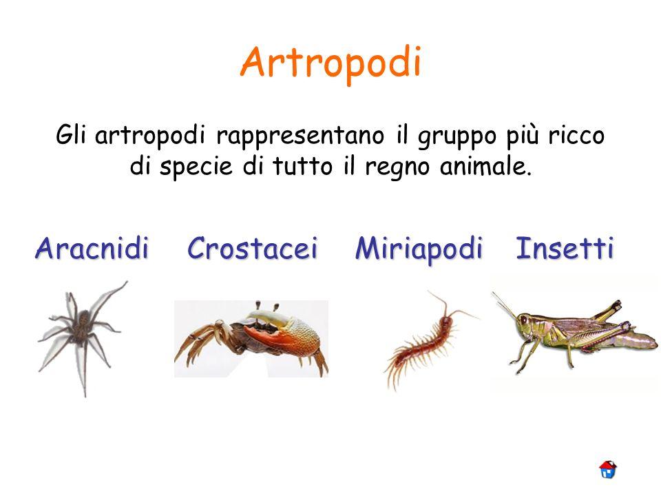 Artropodi Aracnidi Crostacei Miriapodi Insetti
