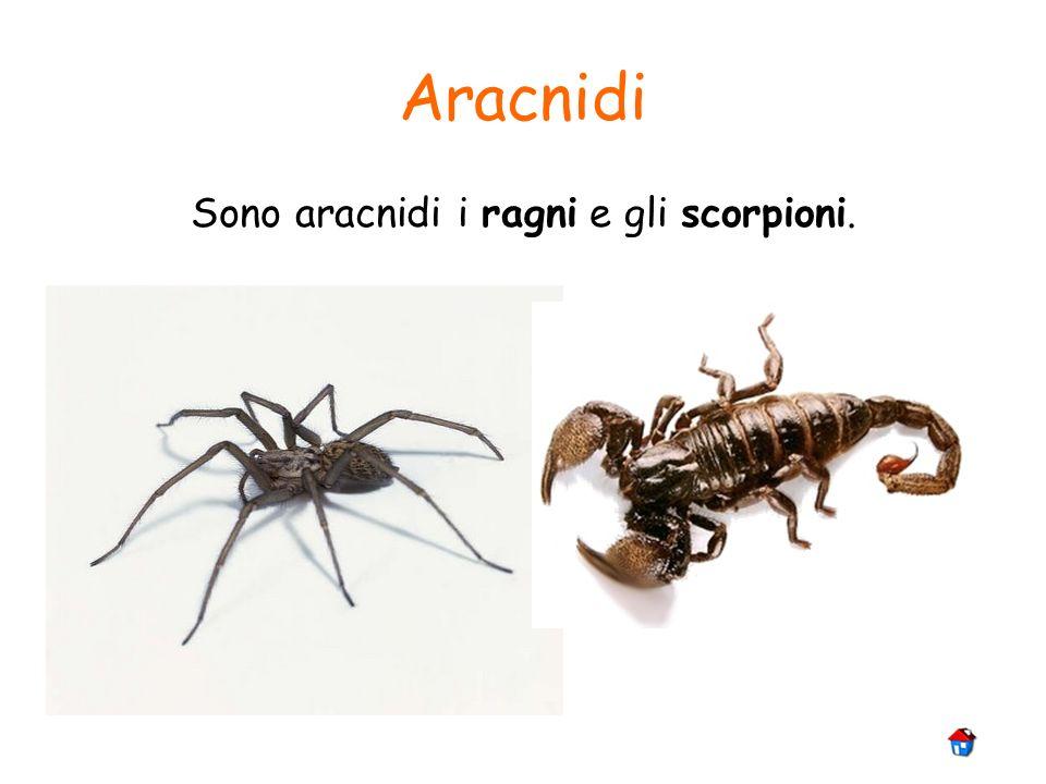 Sono aracnidi i ragni e gli scorpioni.
