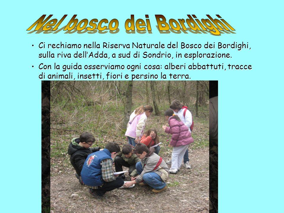 Nel bosco dei Bordighi Ci rechiamo nella Riserva Naturale del Bosco dei Bordighi, sulla riva dell'Adda, a sud di Sondrio, in esplorazione.