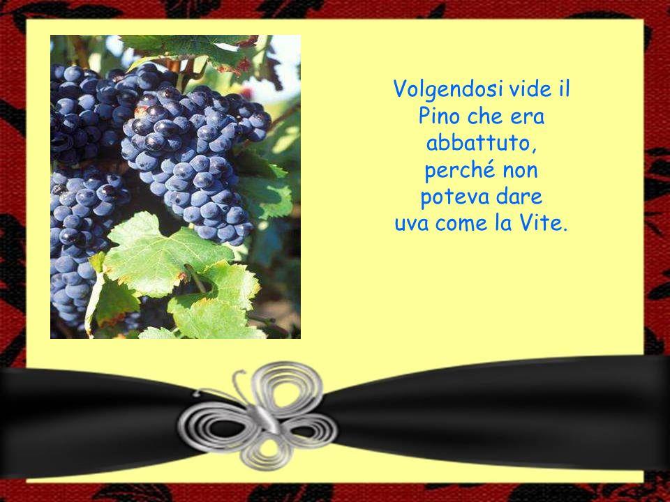 Volgendosi vide il Pino che era abbattuto, perché non poteva dare uva come la Vite.