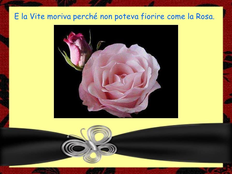 E la Vite moriva perché non poteva fiorire come la Rosa.