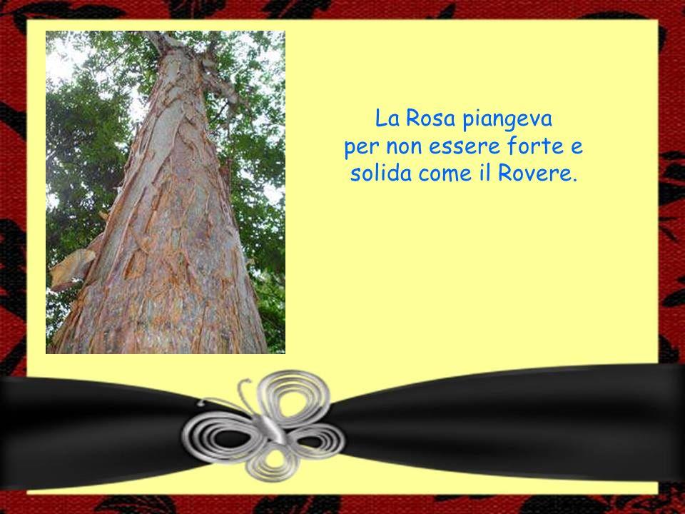 La Rosa piangeva per non essere forte e solida come il Rovere.
