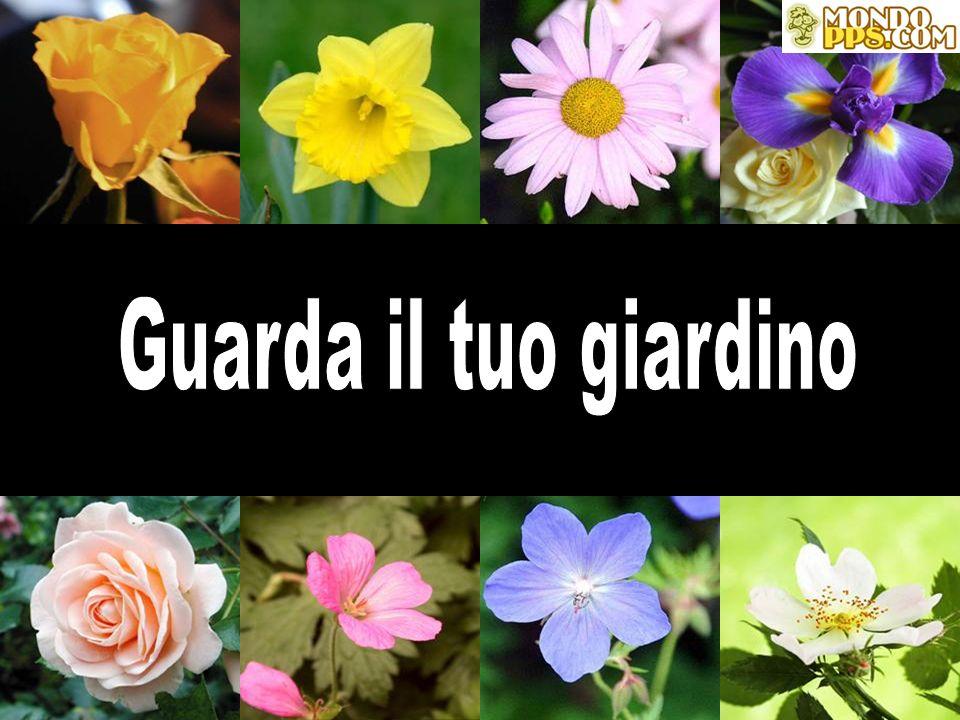 Guarda il tuo giardino GUARDA IL TUO GIARDINO