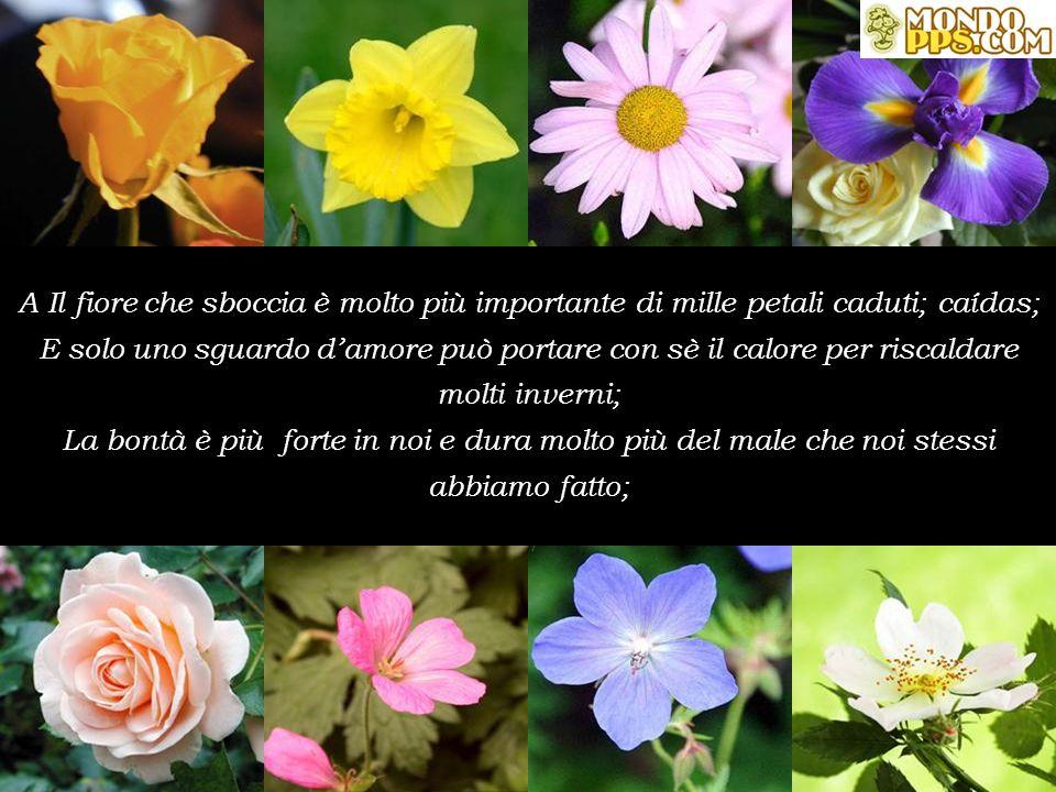 A Il fiore che sboccia è molto più importante di mille petali caduti; caídas; E solo uno sguardo d'amore può portare con sè il calore per riscaldare molti inverni;