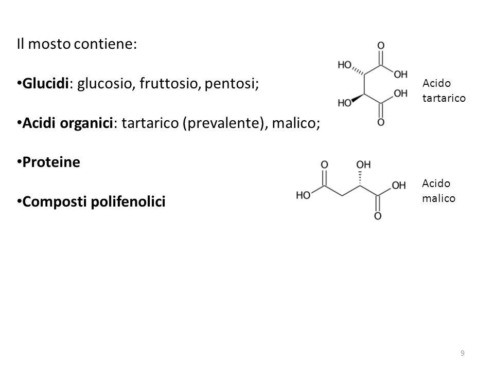 Glucidi: glucosio, fruttosio, pentosi;