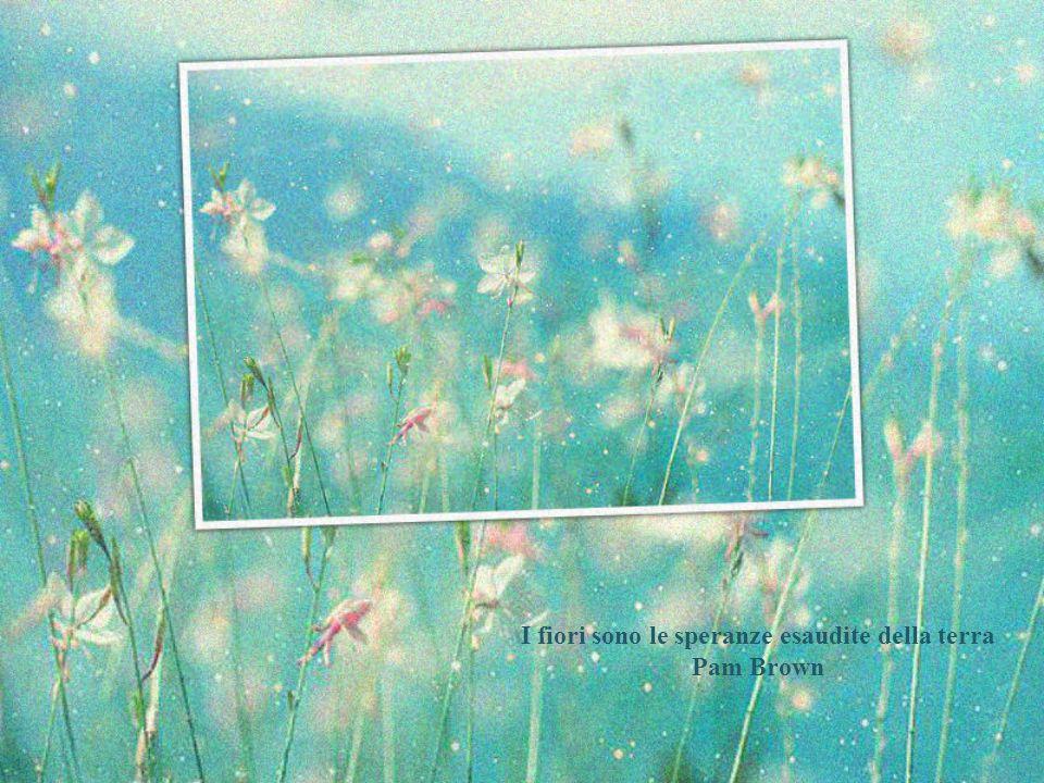 I fiori sono le speranze esaudite della terra Pam Brown