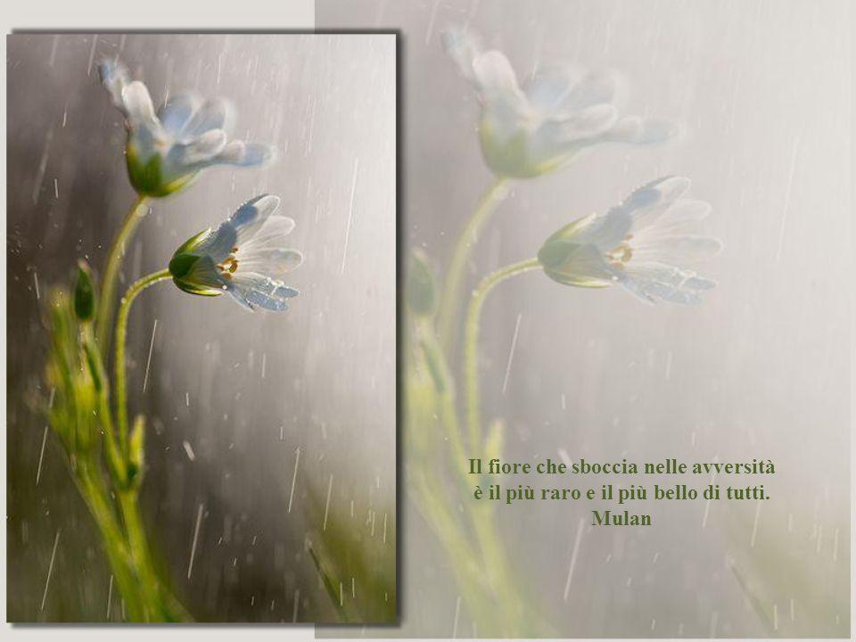 Il fiore che sboccia nelle avversità