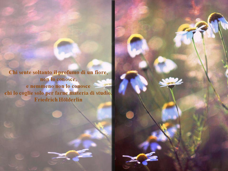 Chi sente soltanto il profumo di un fiore, non lo conosce,