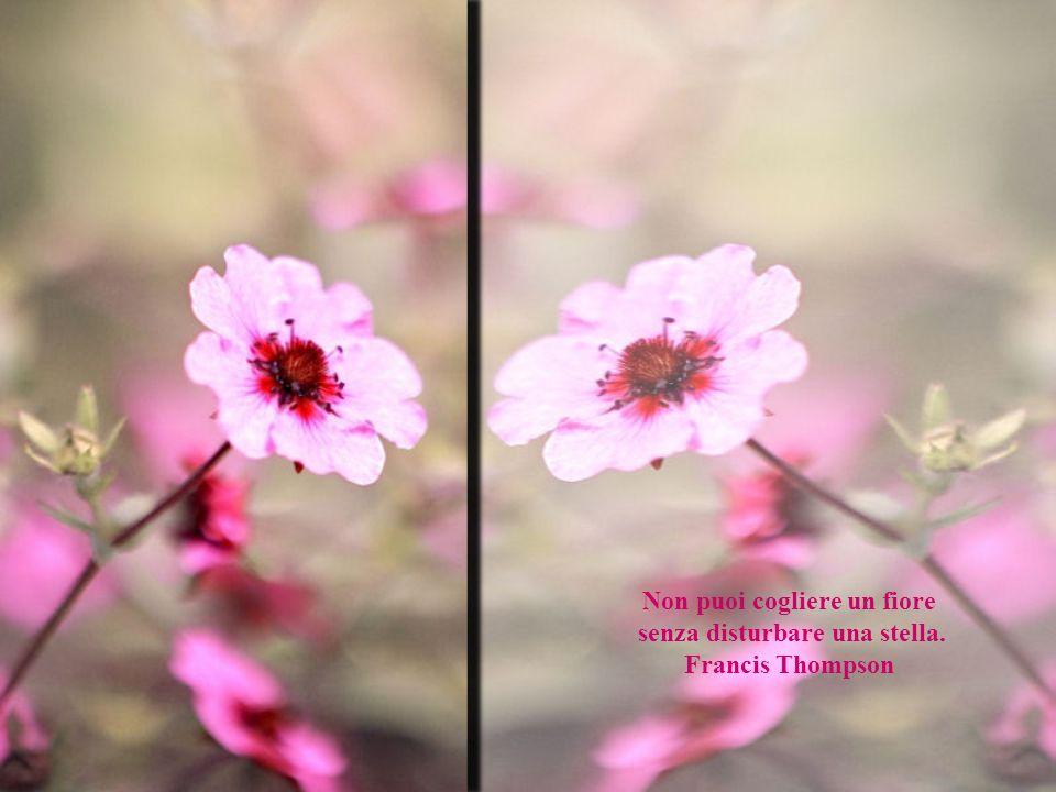 Non puoi cogliere un fiore