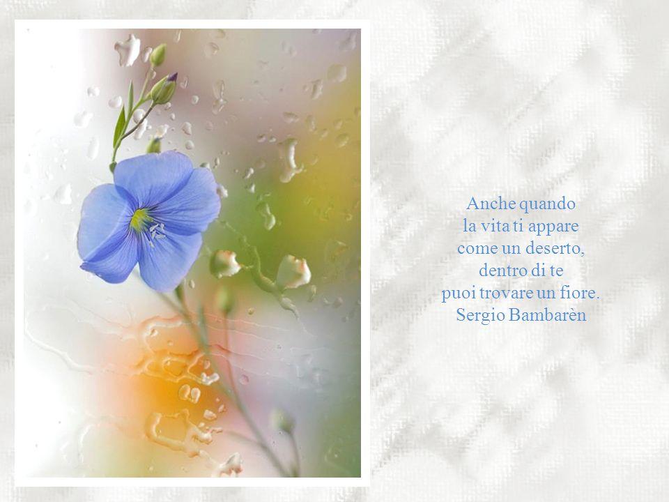 puoi trovare un fiore. Sergio Bambarèn
