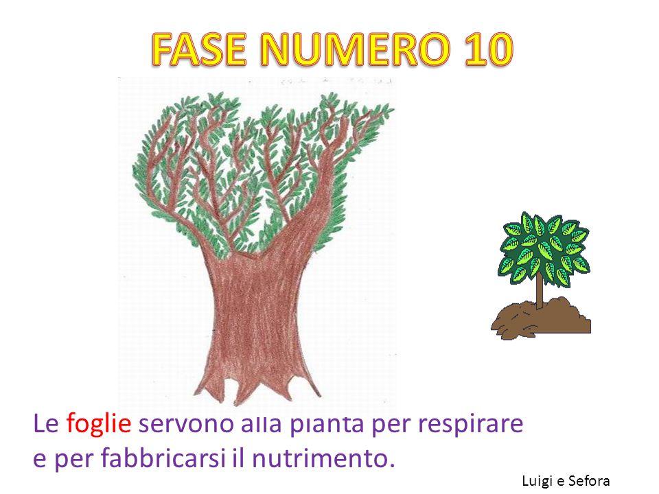 FASE NUMERO 10 Le foglie servono alla pianta per respirare e per fabbricarsi il nutrimento.