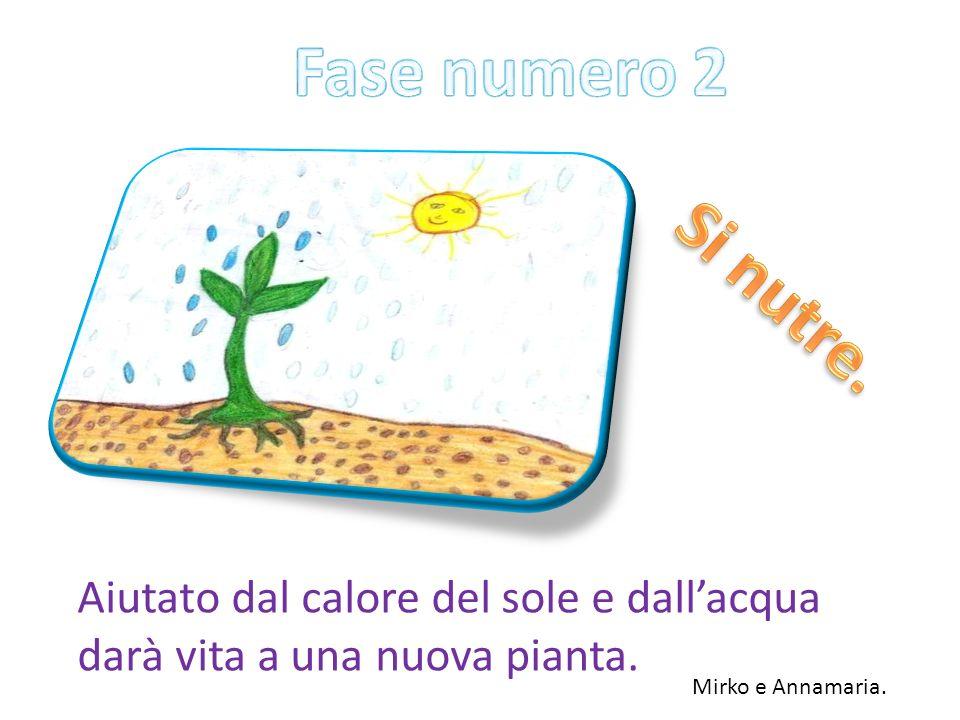 Fase numero 2 Si nutre. Aiutato dal calore del sole e dall'acqua darà vita a una nuova pianta.