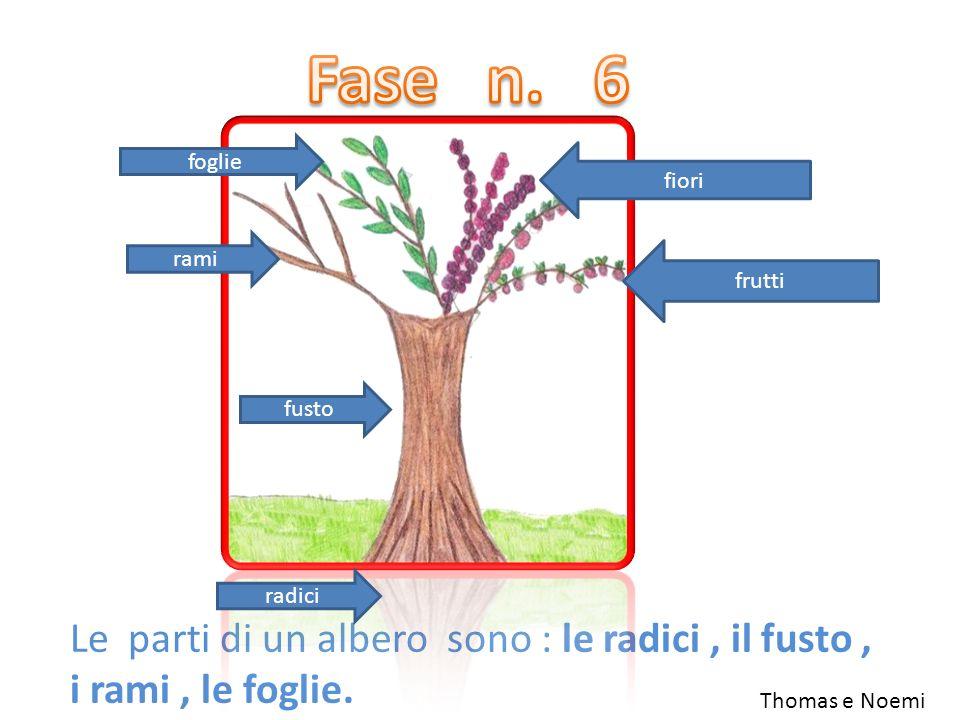 Fase n. 6 foglie. fiori. rami. frutti. fusto. radici. Le parti di un albero sono : le radici , il fusto , i rami , le foglie.