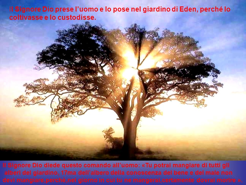 Il Signore Dio prese l'uomo e lo pose nel giardino di Eden, perché lo coltivasse e lo custodisse.