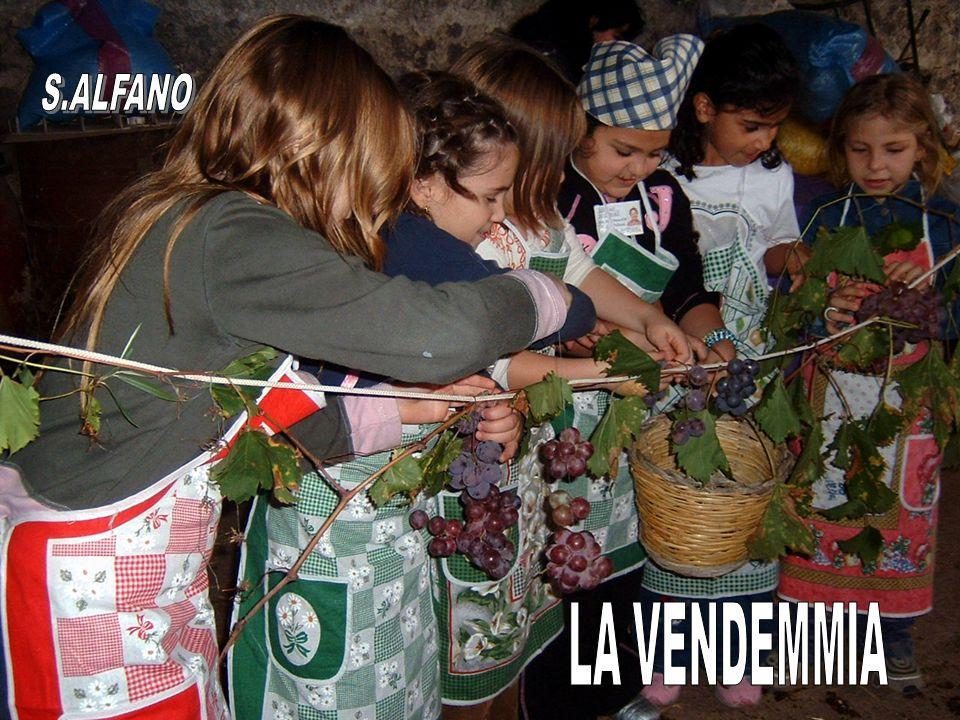 S.ALFANO LA VENDEMMIA
