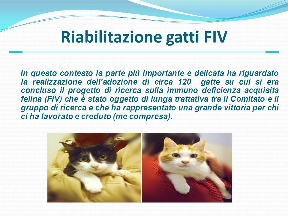 Riabilitazione gatti FIV