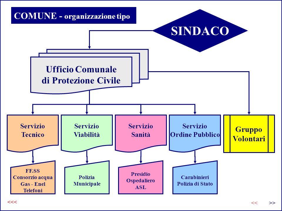 COMUNE - organizzazione tipo
