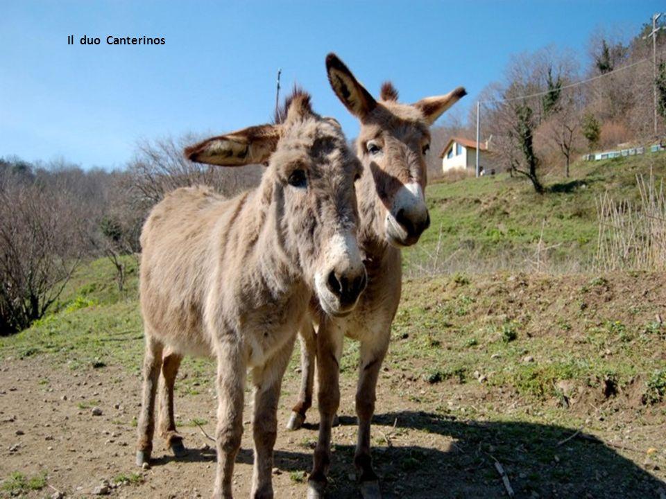 Il duo Canterinos