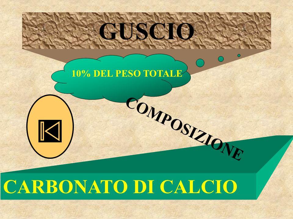 GUSCIO 10% DEL PESO TOTALE COMPOSIZIONE CARBONATO DI CALCIO