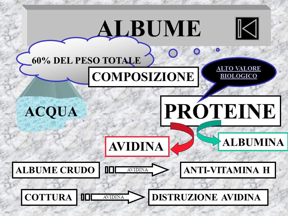 ALBUME PROTEINE ACQUA COMPOSIZIONE AVIDINA ALBUMINA