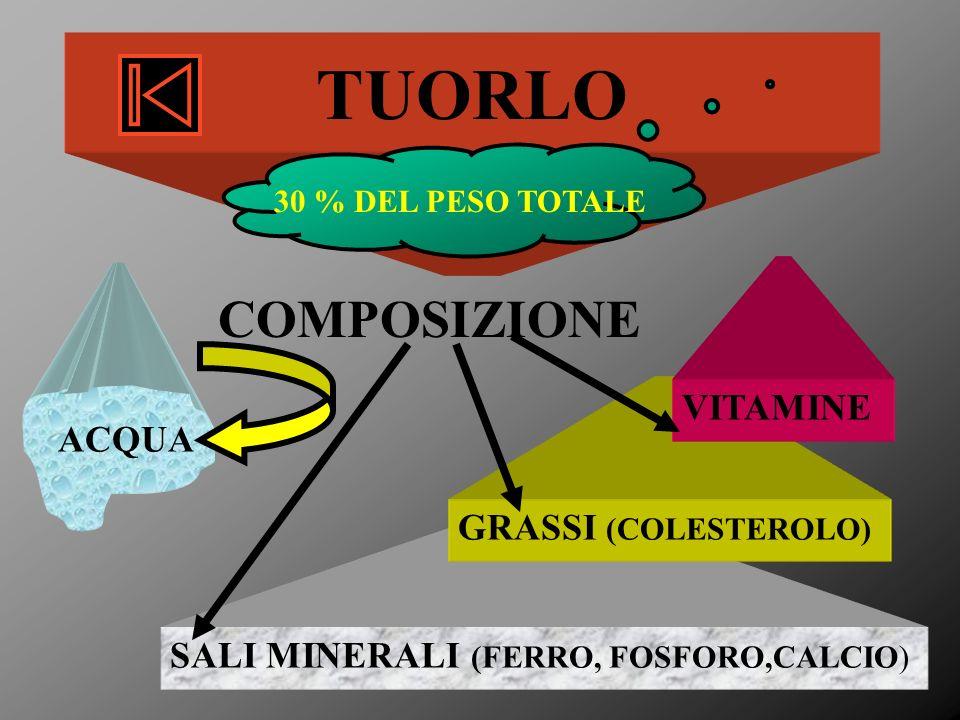 TUORLO COMPOSIZIONE VITAMINE ACQUA GRASSI (COLESTEROLO)