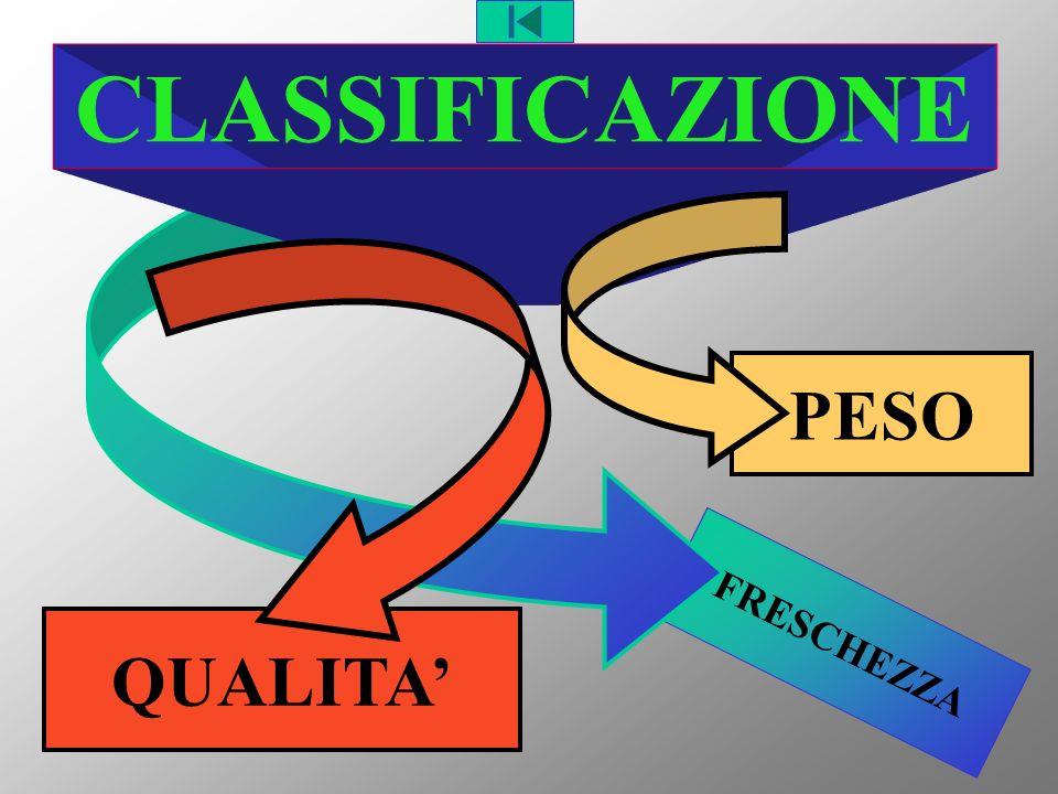 CLASSIFICAZIONE PESO FRESCHEZZA QUALITA'