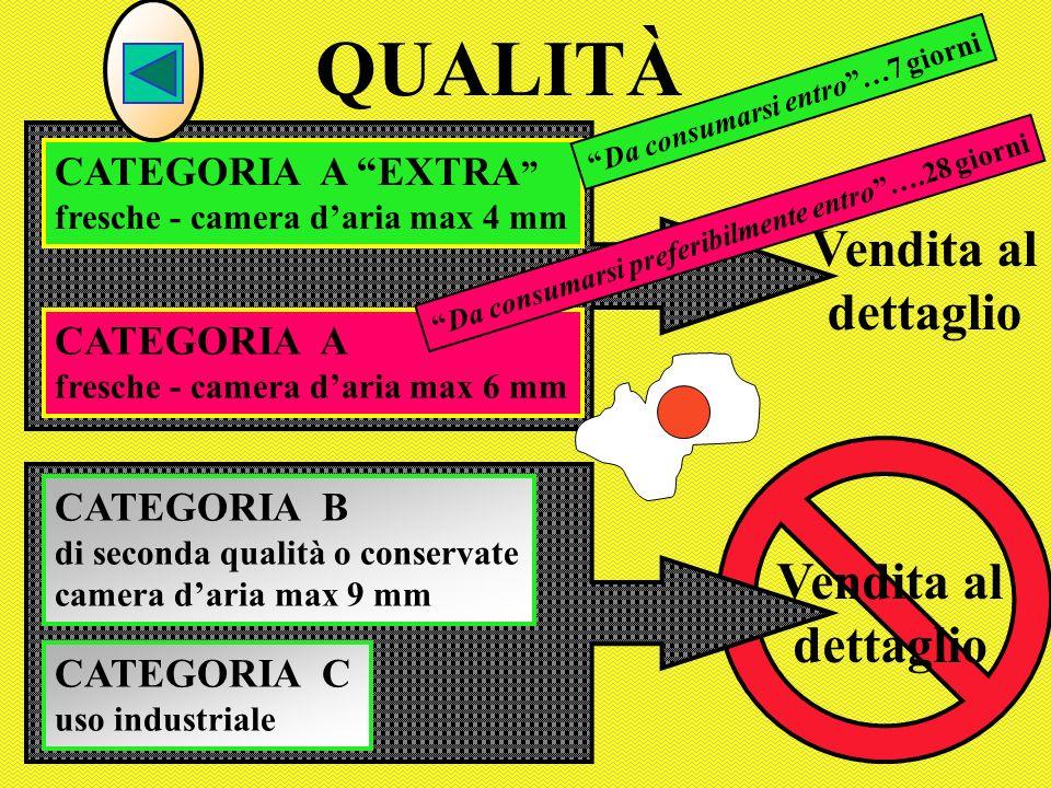 QUALITÀ Vendita al dettaglio Vendita al dettaglio CATEGORIA A EXTRA