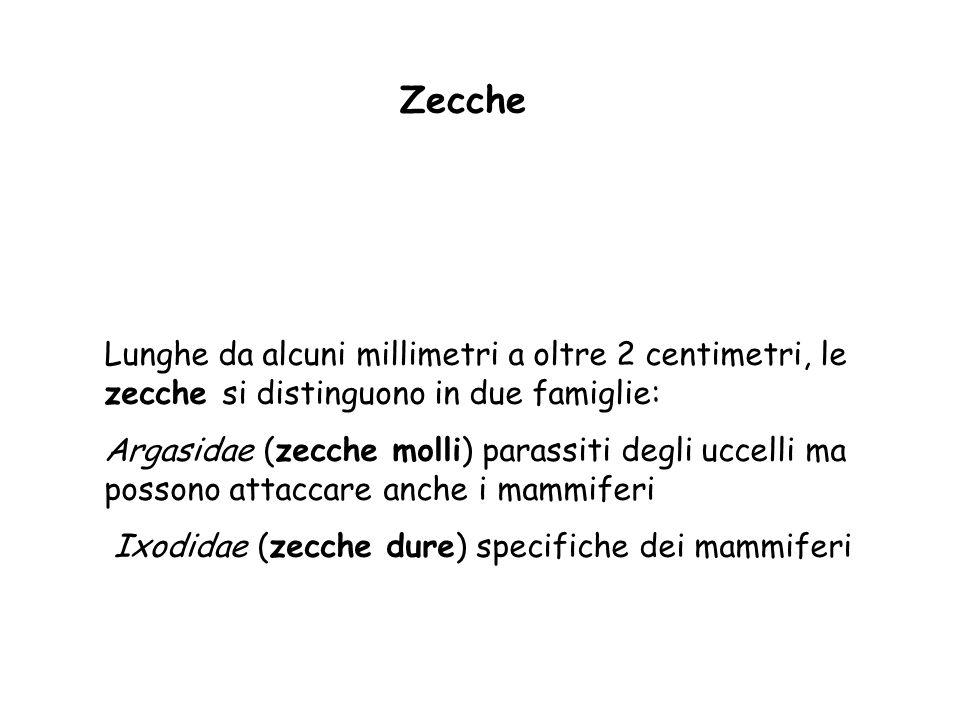 Zecche Lunghe da alcuni millimetri a oltre 2 centimetri, le zecche si distinguono in due famiglie: