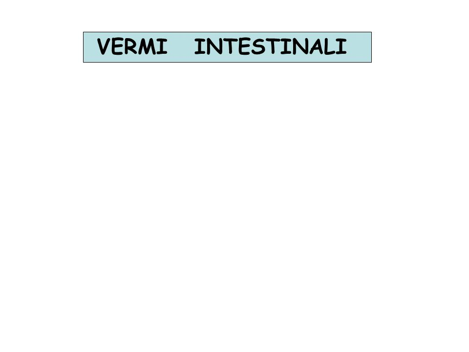 VERMI INTESTINALI