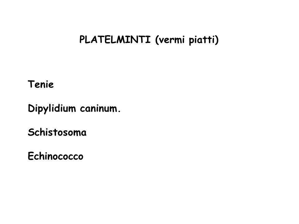 PLATELMINTI (vermi piatti)