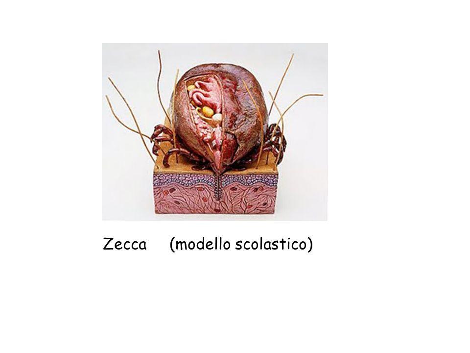 Zecca (modello scolastico)