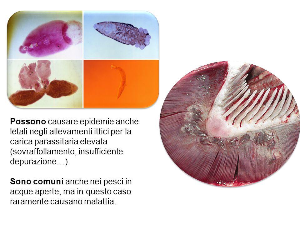 Possono causare epidemie anche letali negli allevamenti ittici per la carica parassitaria elevata (sovraffollamento, insufficiente