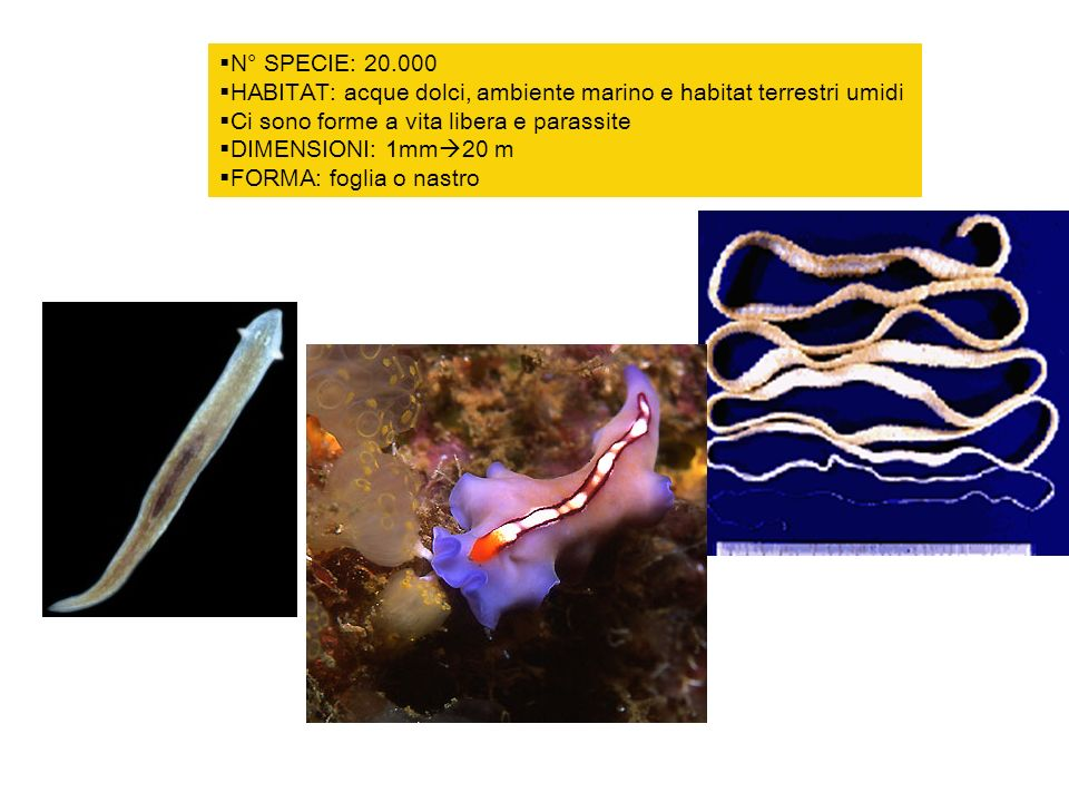 N° SPECIE: 20.000 HABITAT: acque dolci, ambiente marino e habitat terrestri umidi. Ci sono forme a vita libera e parassite.