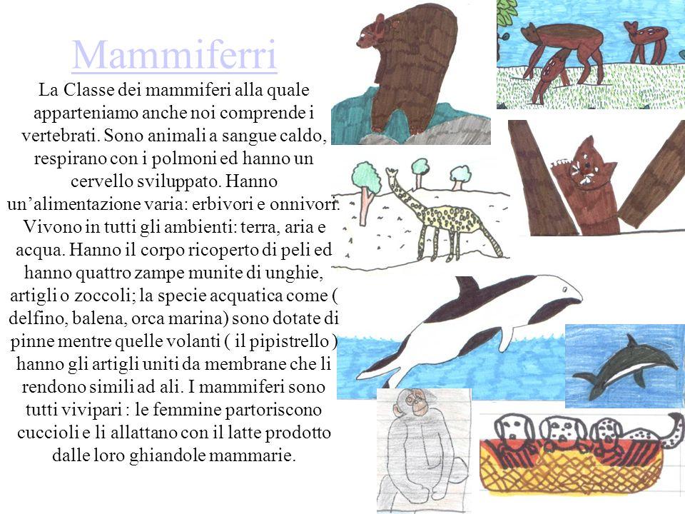 Mammiferri La Classe dei mammiferi alla quale apparteniamo anche noi comprende i vertebrati.