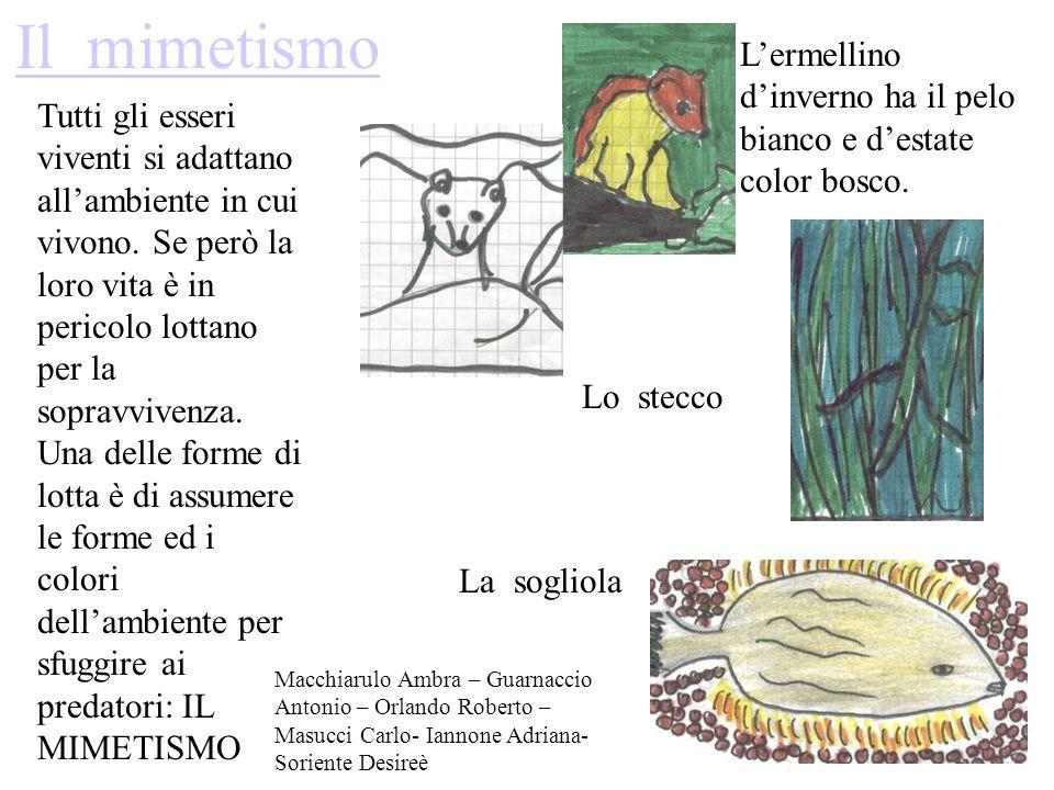 Il mimetismo L'ermellino d'inverno ha il pelo bianco e d'estate color bosco.
