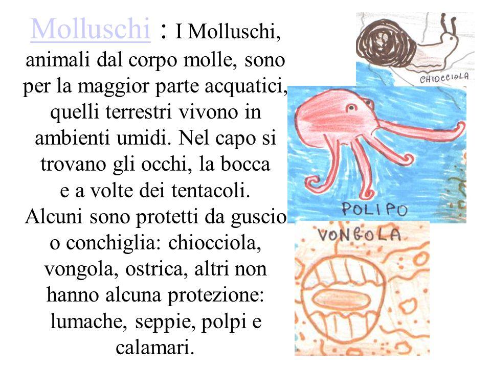 Molluschi : I Molluschi, animali dal corpo molle, sono per la maggior parte acquatici, quelli terrestri vivono in ambienti umidi.