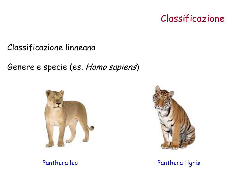 Classificazione Classificazione linneana