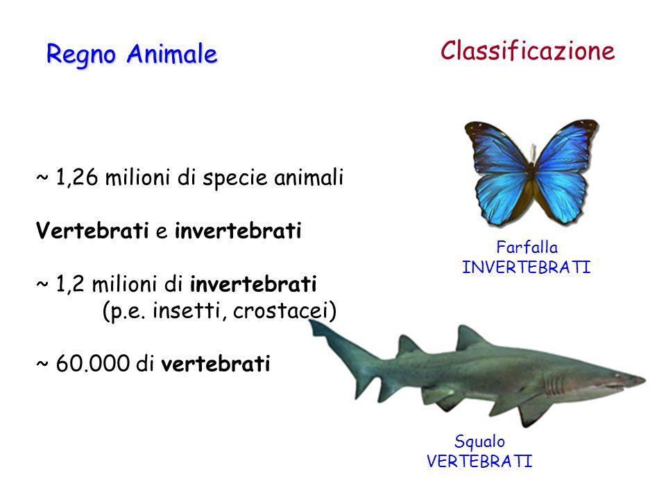 Farfalla INVERTEBRATI