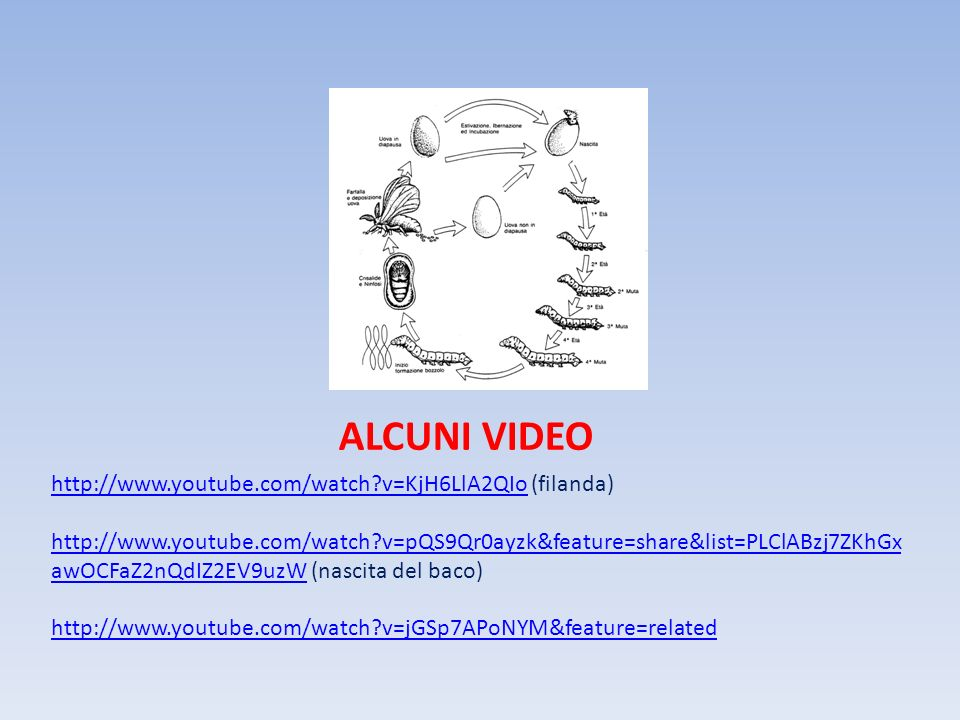ALCUNI VIDEO http://www.youtube.com/watch v=KjH6LlA2QIo (filanda)