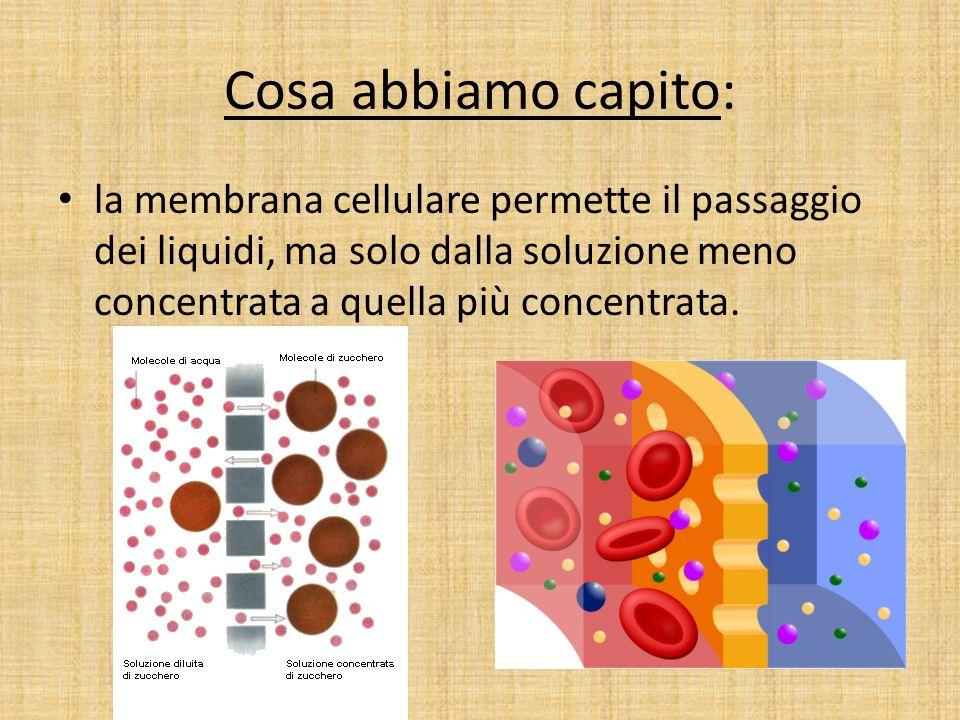 Cosa abbiamo capito: la membrana cellulare permette il passaggio dei liquidi, ma solo dalla soluzione meno concentrata a quella più concentrata.