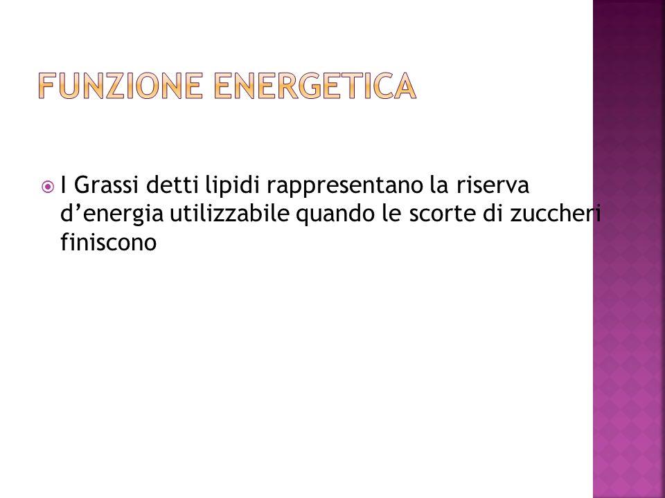FUNZIONE ENERGETICA I Grassi detti lipidi rappresentano la riserva d'energia utilizzabile quando le scorte di zuccheri finiscono.