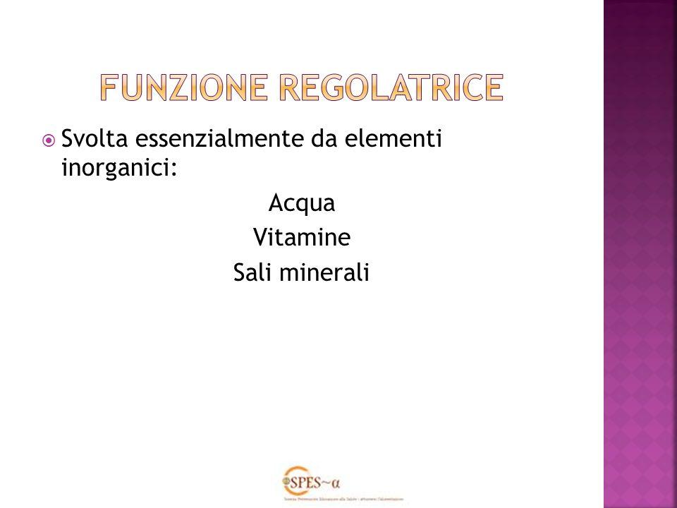 FUNZIONE REGOLATRICE Svolta essenzialmente da elementi inorganici: