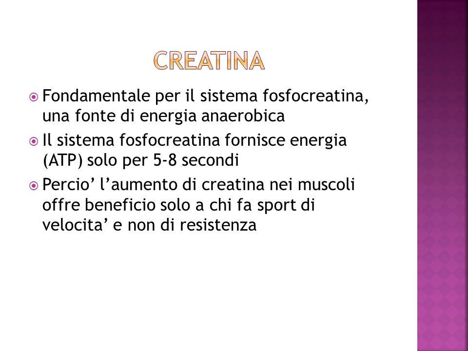 Creatina Fondamentale per il sistema fosfocreatina, una fonte di energia anaerobica.