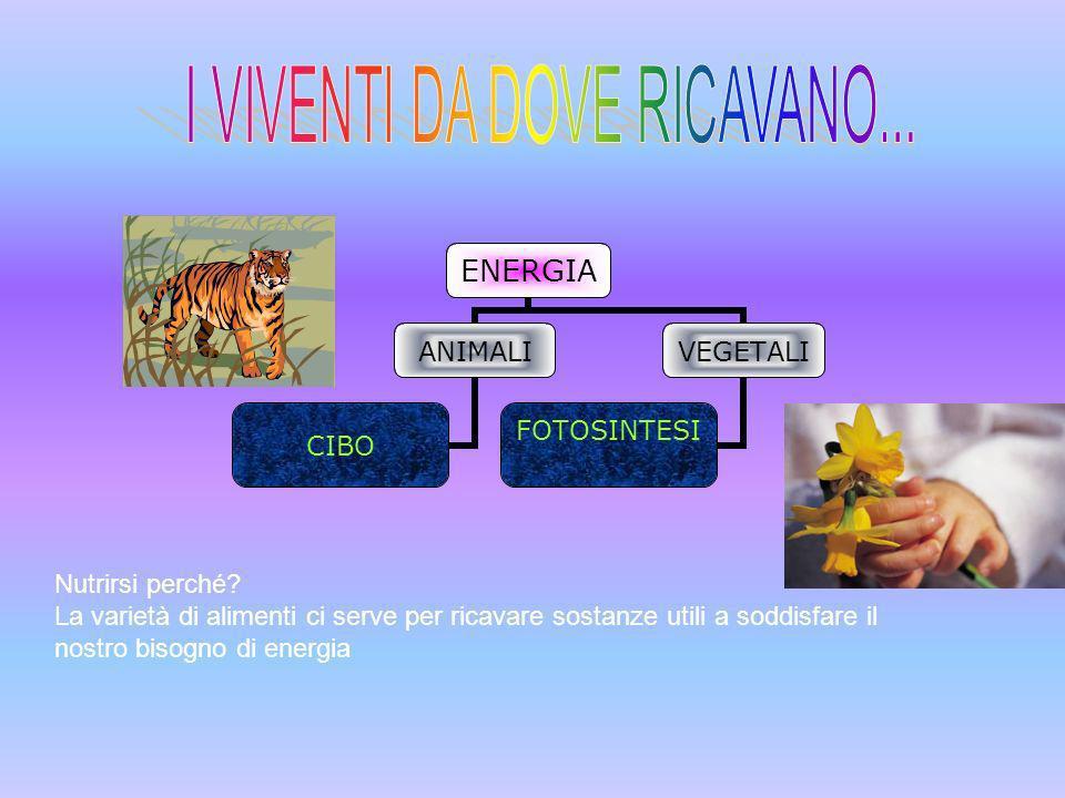 I VIVENTI DA DOVE RICAVANO...