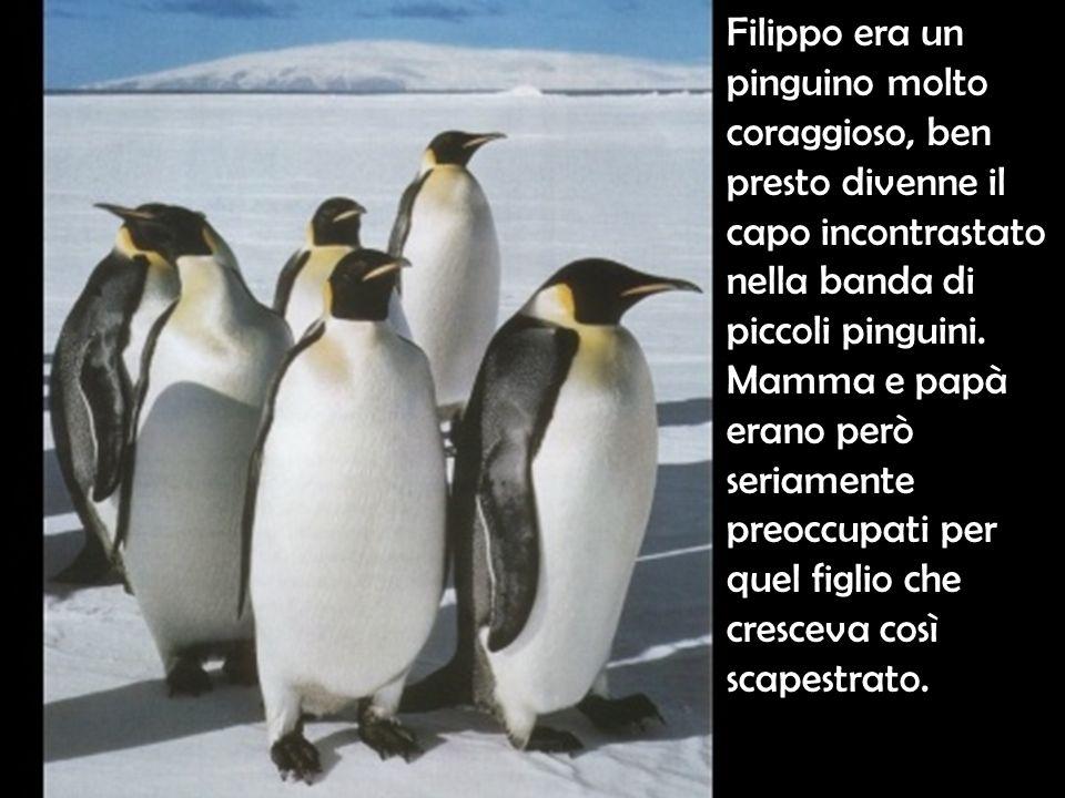 Filippo era un pinguino molto coraggioso, ben presto divenne il capo incontrastato nella banda di piccoli pinguini.