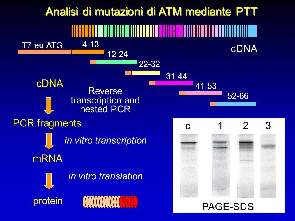 Analisi di mutazioni di ATM mediante PTT