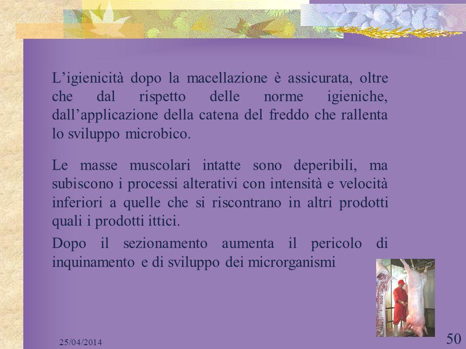 L'igienicità dopo la macellazione è assicurata, oltre che dal rispetto delle norme igieniche, dall'applicazione della catena del freddo che rallenta lo sviluppo microbico.