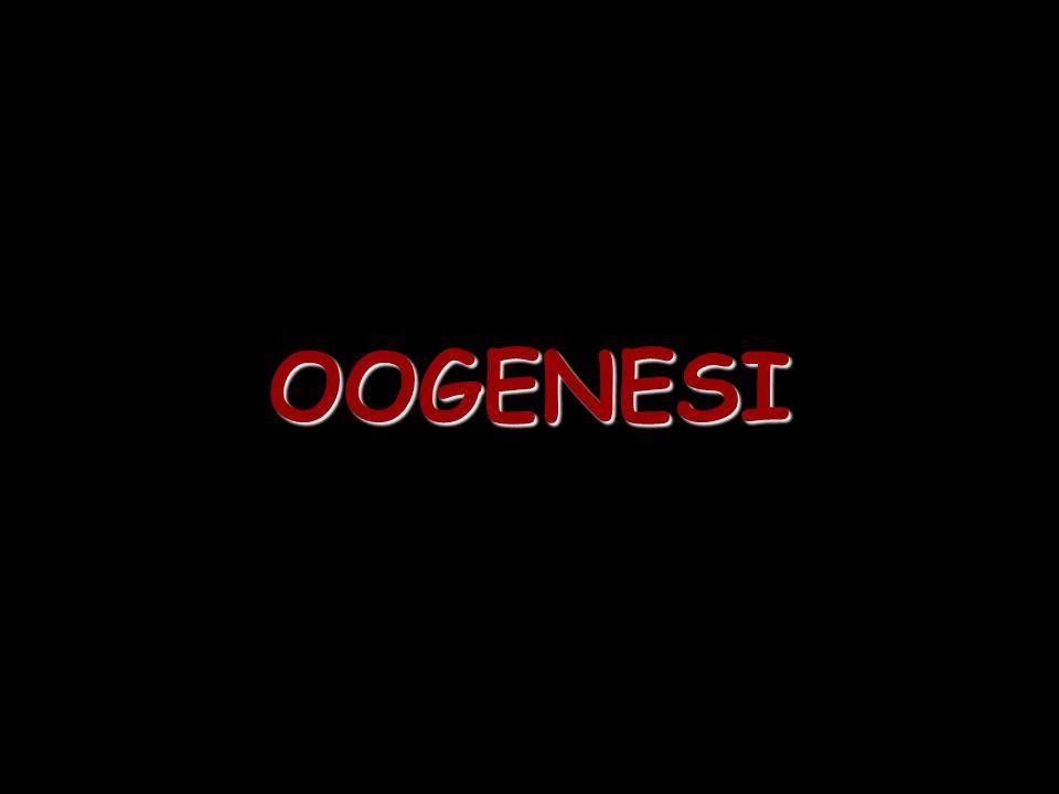 OOGENESI
